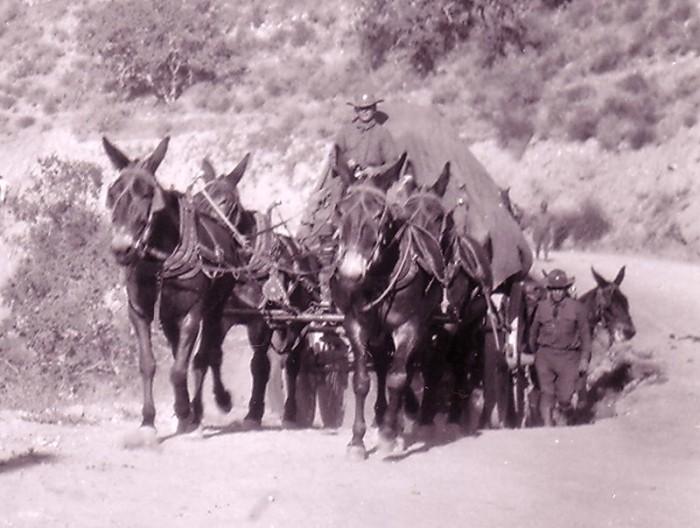 wagoner