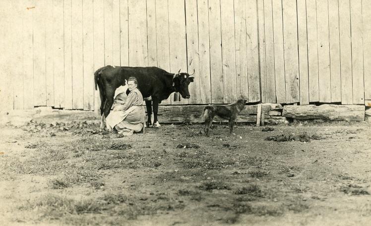 Harnagel milking X