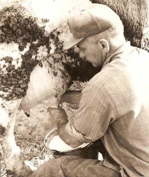 Marvin Burroughs milking