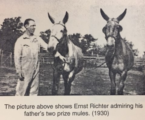 Martin Richter mules with Ernst